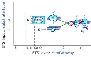 NS-pathway control state