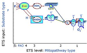 Hemnes Bedbank Bruin.Fatty Acid Oxidation Pathway Control State Bioblast
